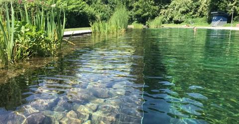 Planten zuiveren het zwemwater